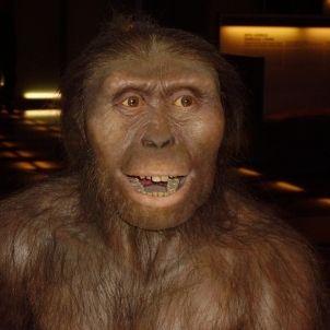 Australopithecus afarensis wikipedia