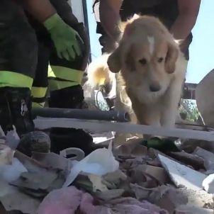 gos itàlia