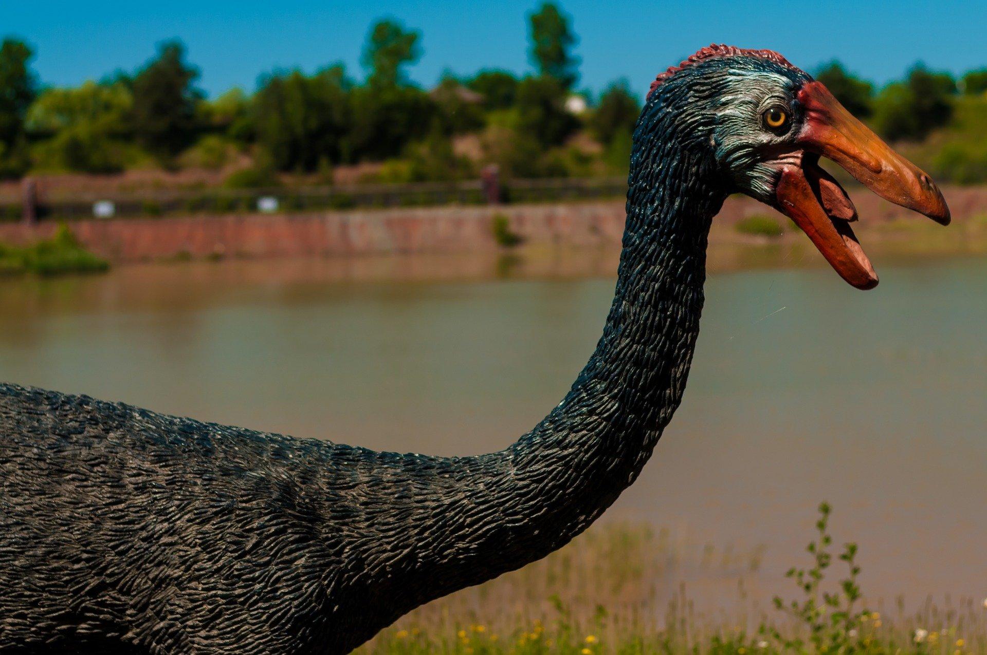 dinosaure plomes pixabay