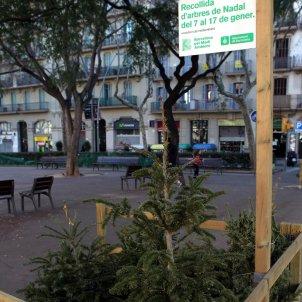 punt recollida arbres Nadal ACN