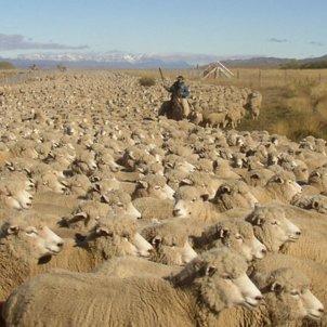 seras un dels nostres sectes ovelles pixabay