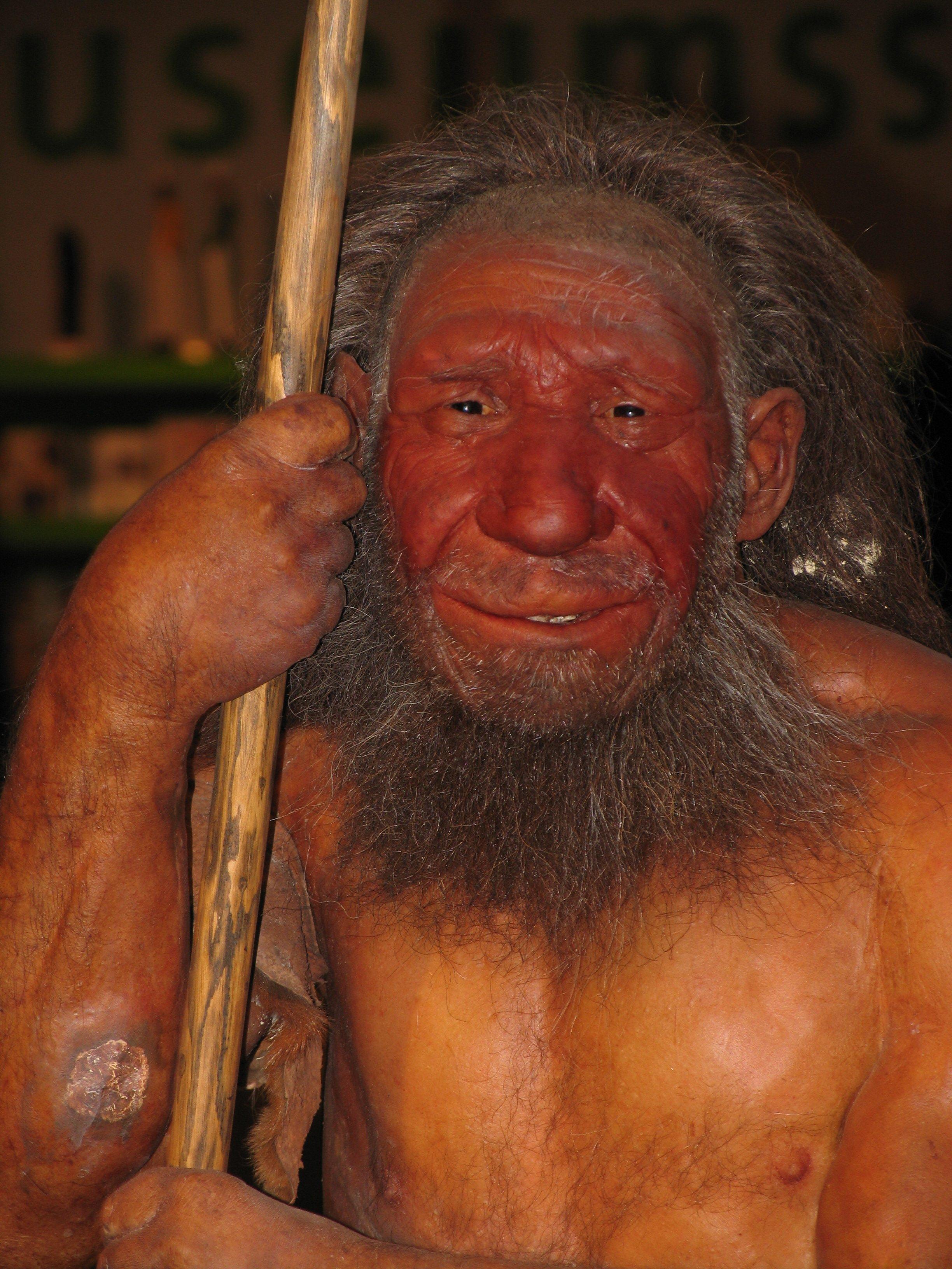 Neandertaler art rupestre Stefan Scheer