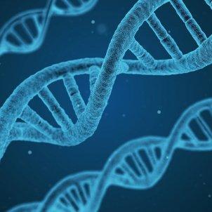 adn genètica pixabay