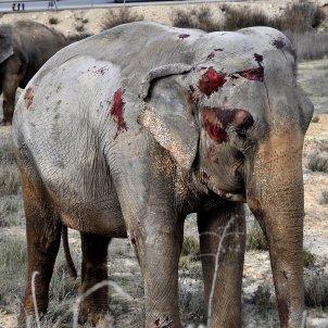 Elefant cures albacete EFE