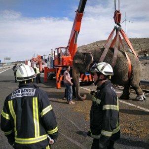 elefante albacete Europa press