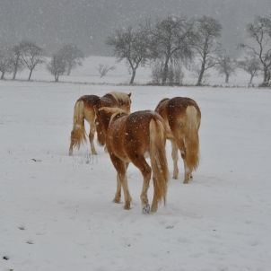 sortir robar cavalls pixabay