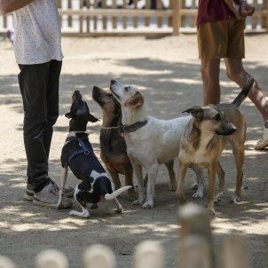 Gossos - Sergi Alcazar