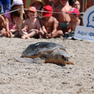 tortuga babaua alliberada Ametlla de Mar ACN
