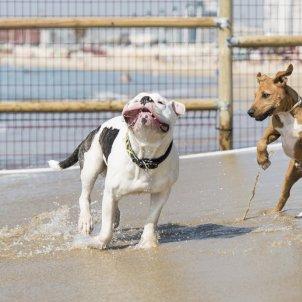Platja de gossos de Llevant / Ajuntament de Barcelona