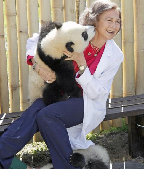 sofia os panda