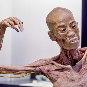 Human Bodies Les Arenes
