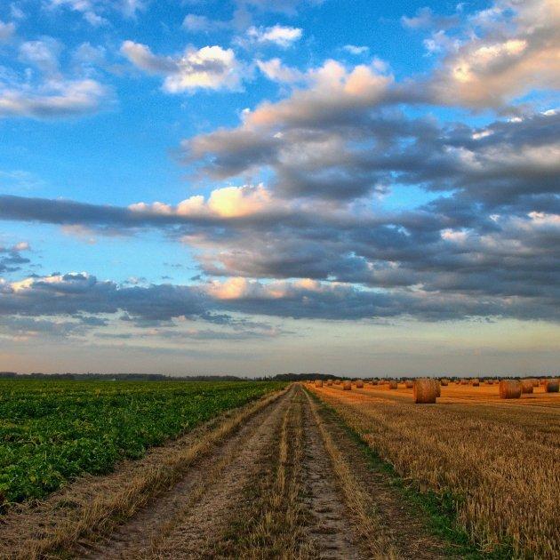 agricultura   pixabay