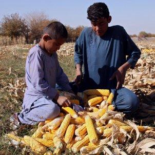 nens afganistan efe