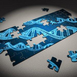 humanitat genèticament modificada