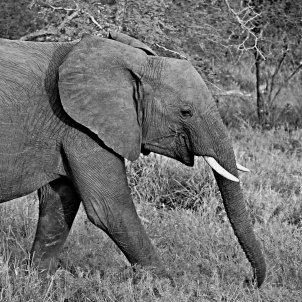 Elefant (Pxhere)