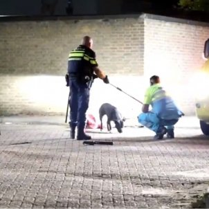 Policía holandesa perro caso Sota
