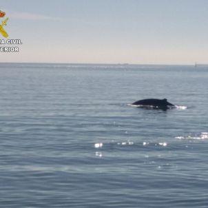 La balena de passeig al Port