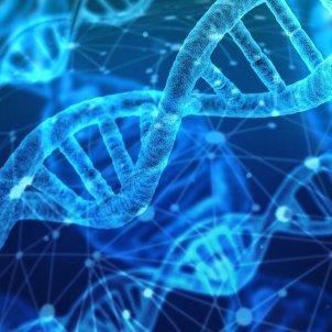 genetica pixabay