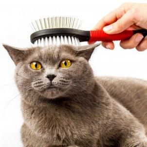 pentinar el gat 1