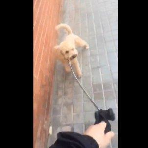 gos vídeo viral Albiol - captura vídeo @lolalp3