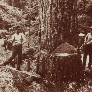 serrant troncs usa singley b l 3