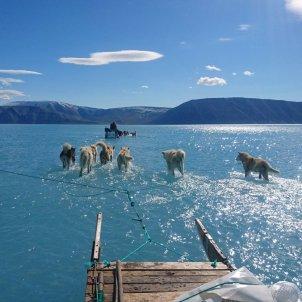 gossos groenlandia - @SteffenMalskaer