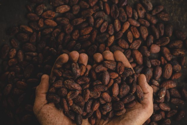 cacao -  unsplash
