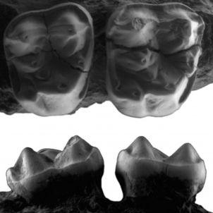 dents icp