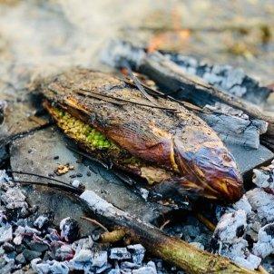 cuina Neolític 11 Fundació Alícia