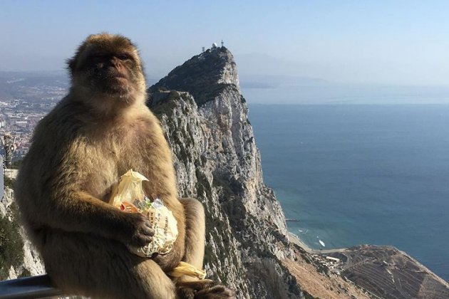 Monkey Gibraltar @tweeruth