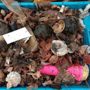 Brossa pescada al litoral de (Eve Galimany)