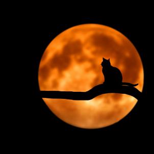 Lluna (Bessi, Pixabay)