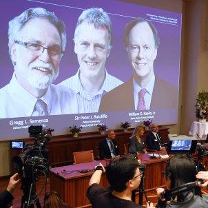 Lliurament del Premis Nobel Medicina 2019 EFE