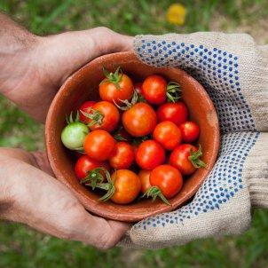 agricultura - unsplash