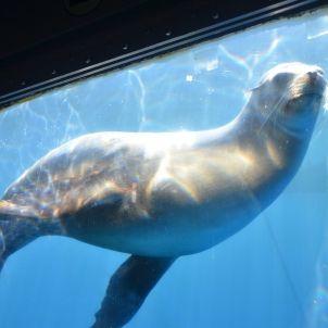 leones marinos europa press