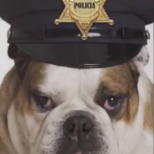 bulldogMossos Captura TV3