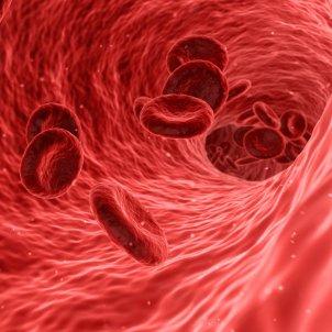 Sangre Pixabay
