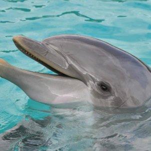 Dofí recurs
