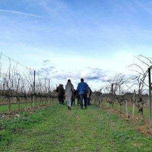 Raventós i Blanc vinyes 6