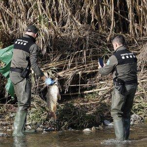 operarius peix mort riu besos - Efe