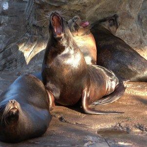 Europa Press Leones marinos en un hábitat natural