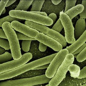 Bacterias PxHere